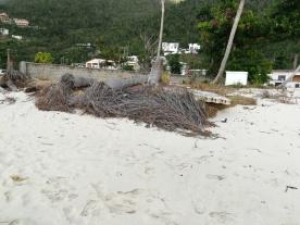 So sehen Palmenwurzeln aus